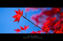 MT SEORAK - contrast