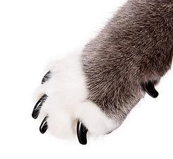 kitty nails.jpg
