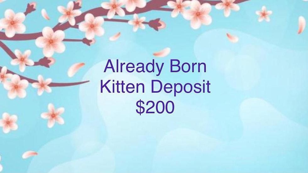 Kitten Reservation VIP