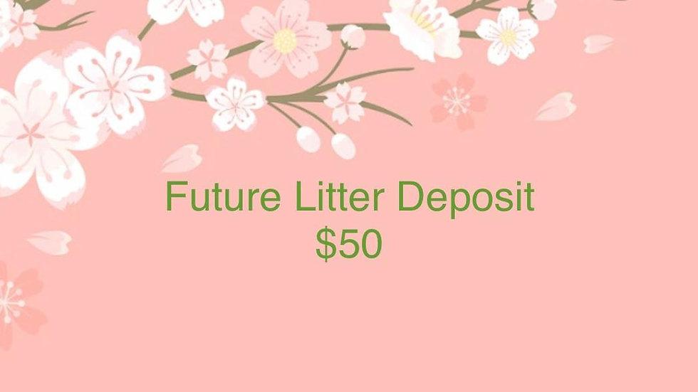 Kitten Reservation Future Litter