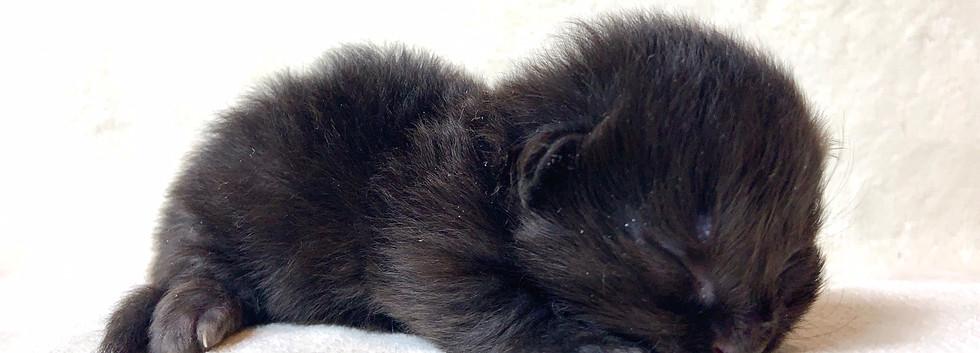 rughugger kitten