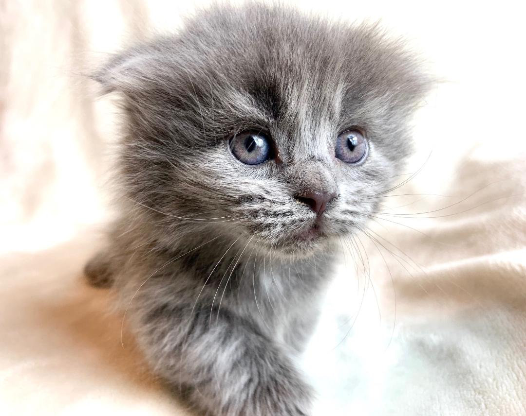 Live Chat with a Kitten 3-5 mins