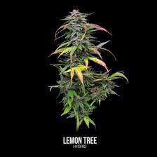 Lemon Tree-Labeled.mp4