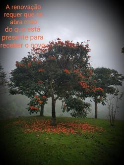 Árvore da renovação