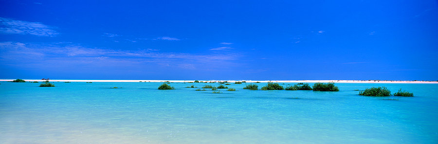 Mangroves, Willie Creek, Broome, Kimberley, North Western Australia