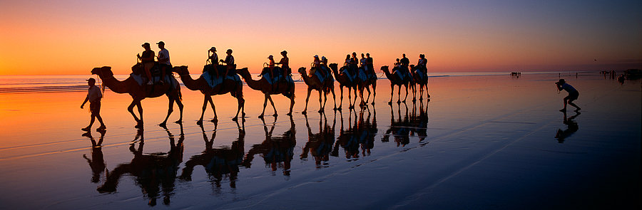 Camels, Cable Beach, Broome, North Western Australia