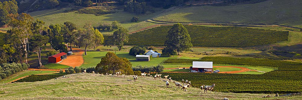 Winery, farm land and sheep, Nannup, South Western Australia