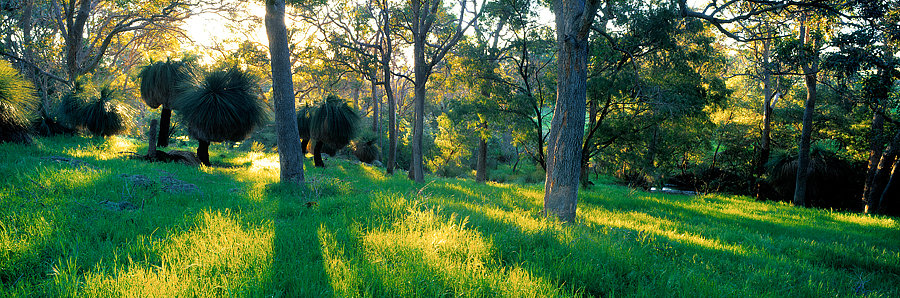 Farm land and grass trees, Yallingup, South Western Australia