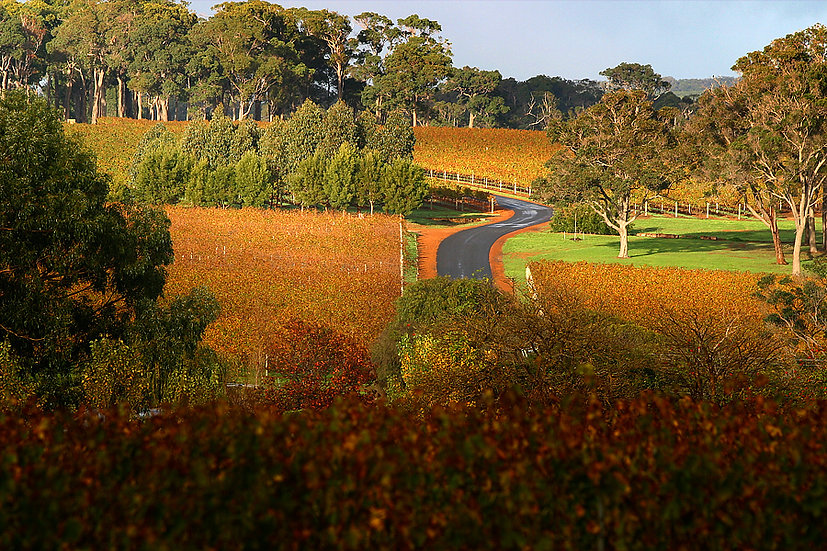 Winery, Margaret River,  South Western Australia