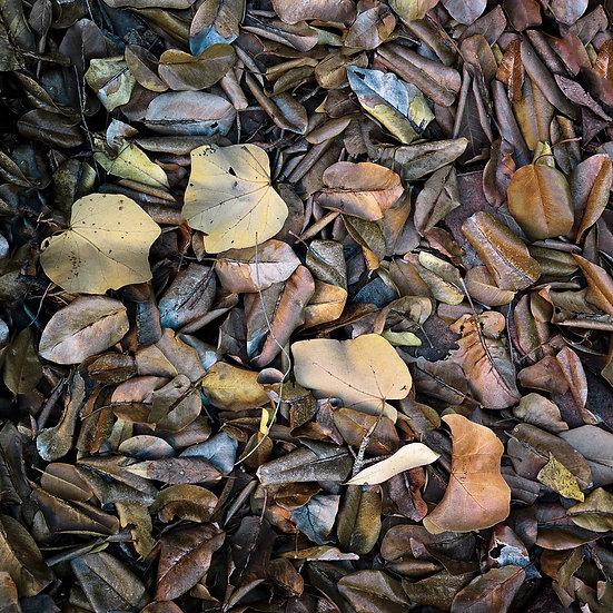 Leaf Litter, Kimberley, North Western Australia