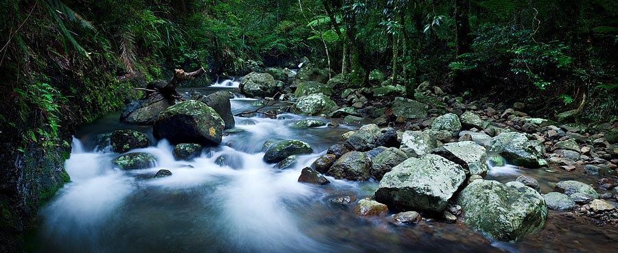 Stream, Lamington National Park, Queensland, Australia