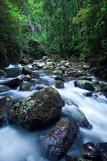 Creek, Lamington National Park, Queensland, Australia