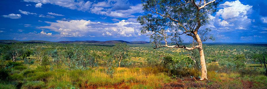 Ghost Gum Tree, Karijini National Park, Pilbara, North Western Australia