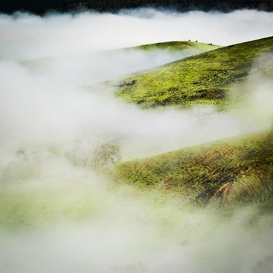 Fog on rolling hills