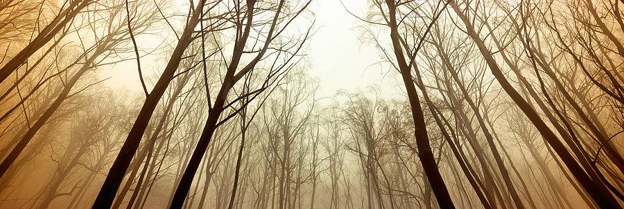 Trees, Mount Hotham, Victoria, Australia