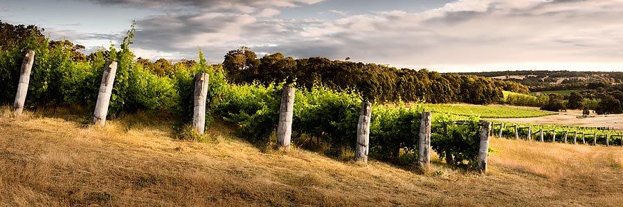 Winery, vineyard