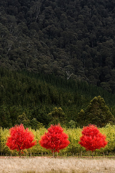 aAutumn colours at Bright, Victoria, Australia