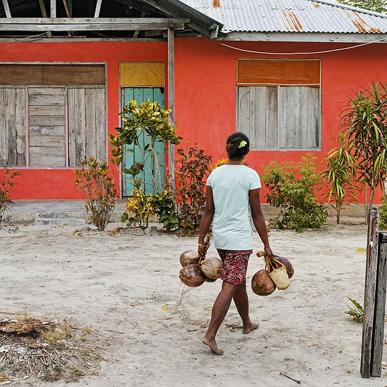 Coconut Collecting, West Papua New Guinea
