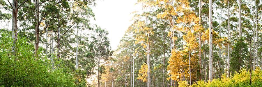 Forest, Pemberton, South Western Australia