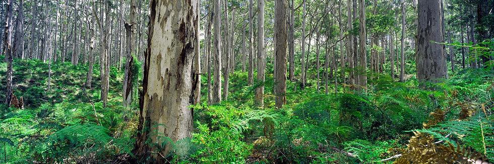Boranup Forest, Margaret River, South Western Australia