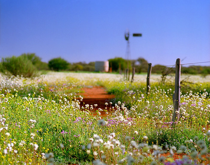 Wild Flowers with windmill