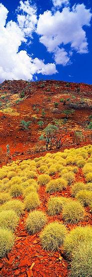 Spinifex, Karijini National Park, North Western Australia