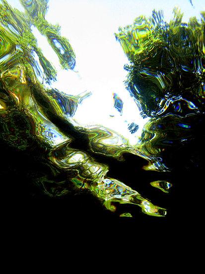 Jungle Reflections II