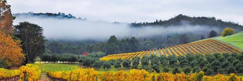 Morning Fog, Vineyard, Winery