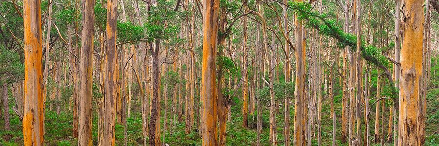 Boranup Forest Western Australia