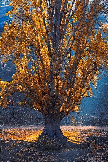 Tree, South Western Australia