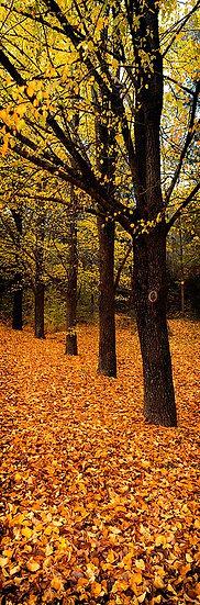 Autumn, Bright, Victoria, Australia