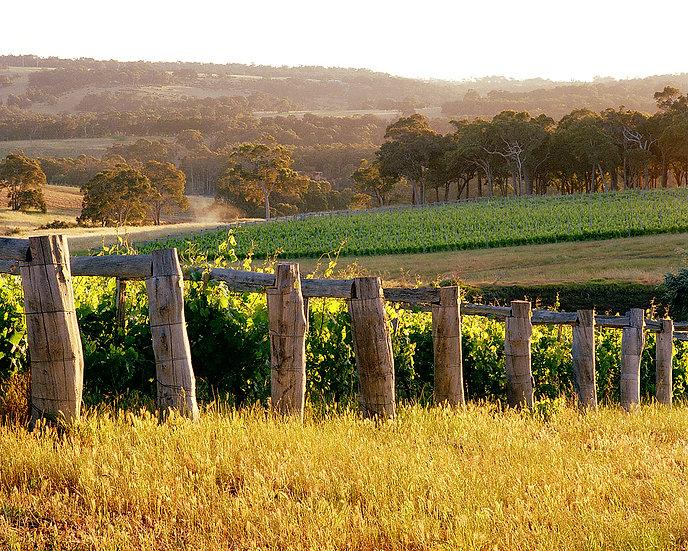 Wildwood Winery, Yallingup, South Western Australia
