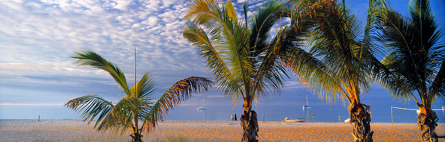 Palm trees, Monkey Mia, Shark Bay, North Western Australia