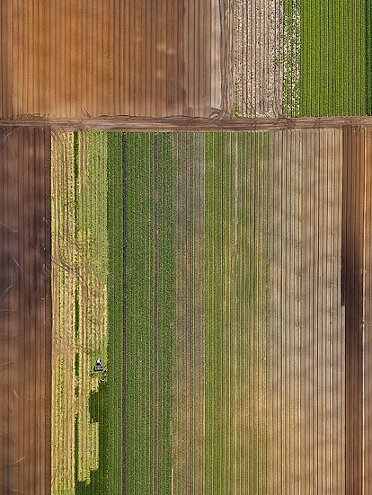 Crops, agriculture.