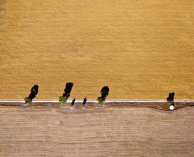 Harvest, crops on farmland, South Western Australia