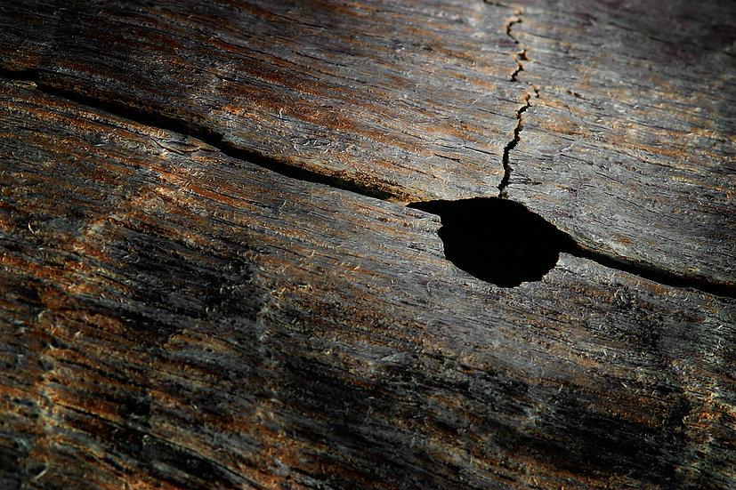 Wooden Log closeup