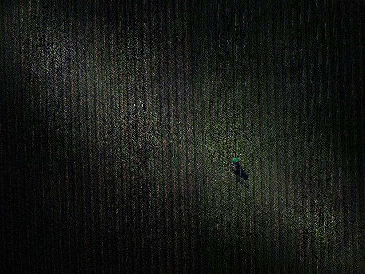 Vineyard Aerial South Western Australia