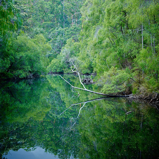 Tranquil river and forest, South Western Australia.