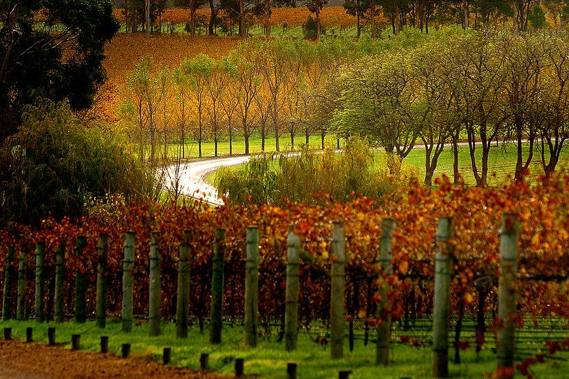 Howard Park Winery, Margaret River, South Western Australia