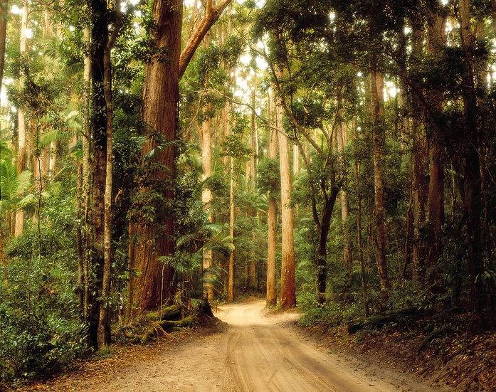 Dirt road through the Fraser Island forest, Queensland, Australia