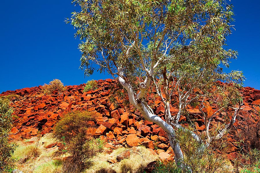 Red rocks and Desert Ghost Gum Tree, Pilbara, North Western Australia