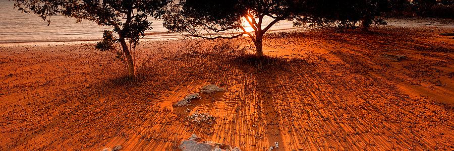 Mangroves, Broome, Kimberly, North Western Australia