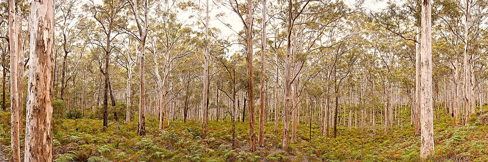 Boranup Forest, Margaret River, South Western Australia