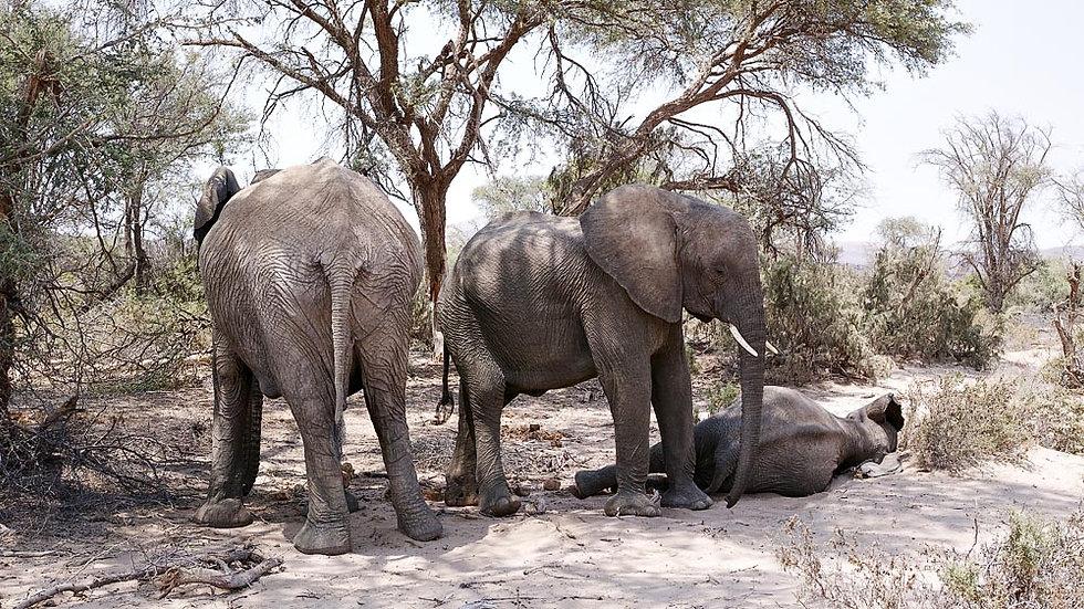 Damaraland, Namibia Africa