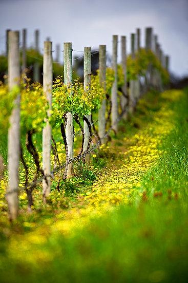 Winery, Pemberton, South Western Australia