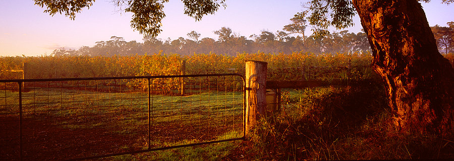 Farm fence and grape vines, Rosiley Estate, Willyabrup, South Western Australia