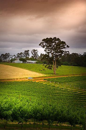 Pemberton Winery, South Western Australia
