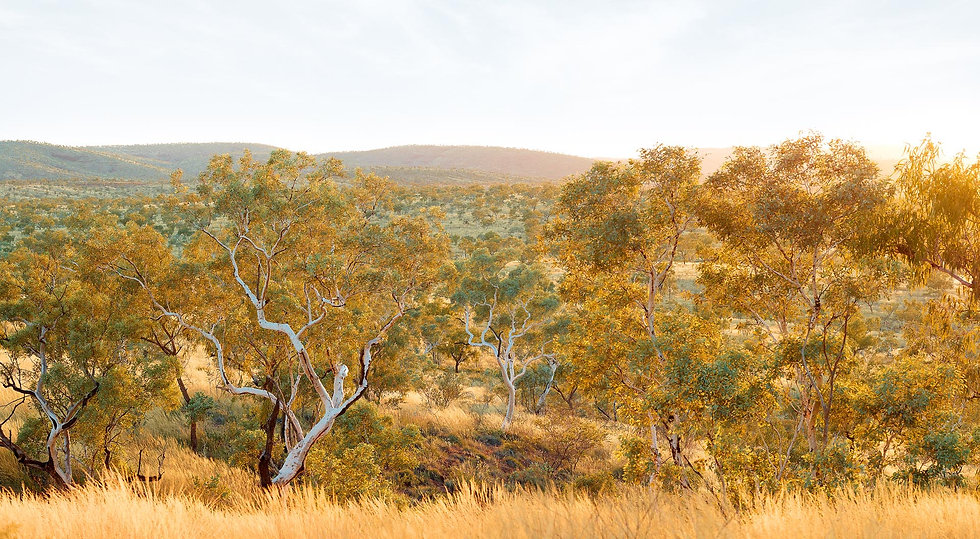Karijini National Park, Pilbara , North Western Australia