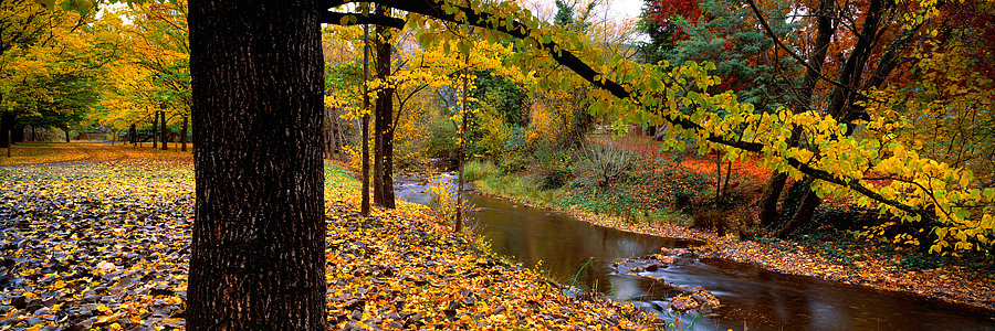 Autumn colours and stream, Bright, Victoria, Australia