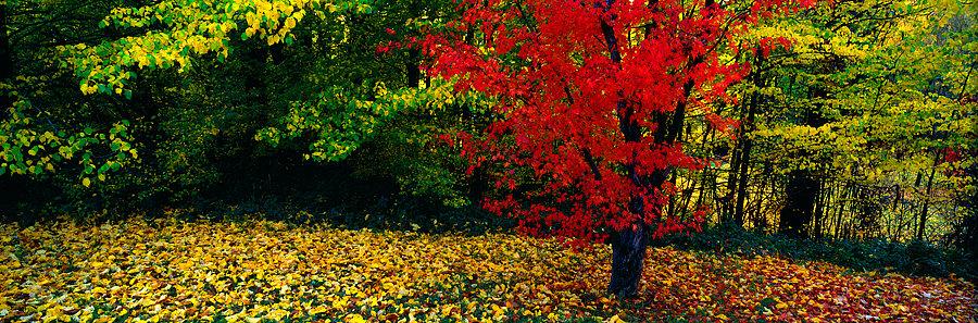 Autumn trees, Victoria, Australia